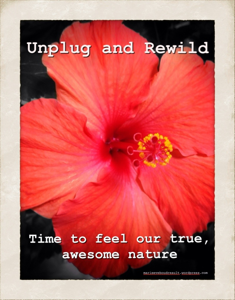why and how to unplug from internet rewild zen life living alternative blog marie-Eve Boudreault author